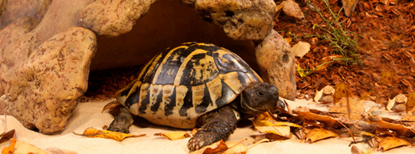 cueva para tortugas exoterra 0