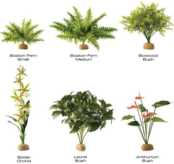 planta orquidea ara a exoterra 0