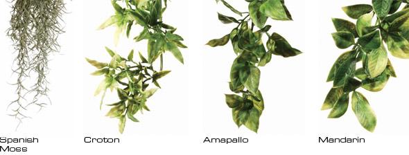 plantas de seda rucus exoterra 0