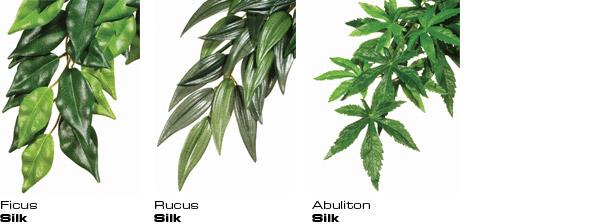 plantas de seda rucus exoterra 1