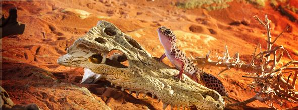 refugio cocodrilo skull exoterra 0