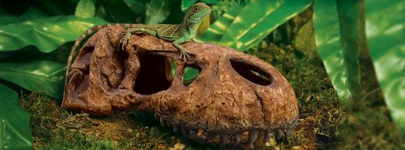 refugio craneo fosil t rex exoterra 1