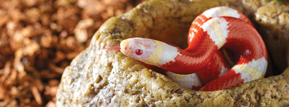 snake bowl ba era sepiente exoterra 0