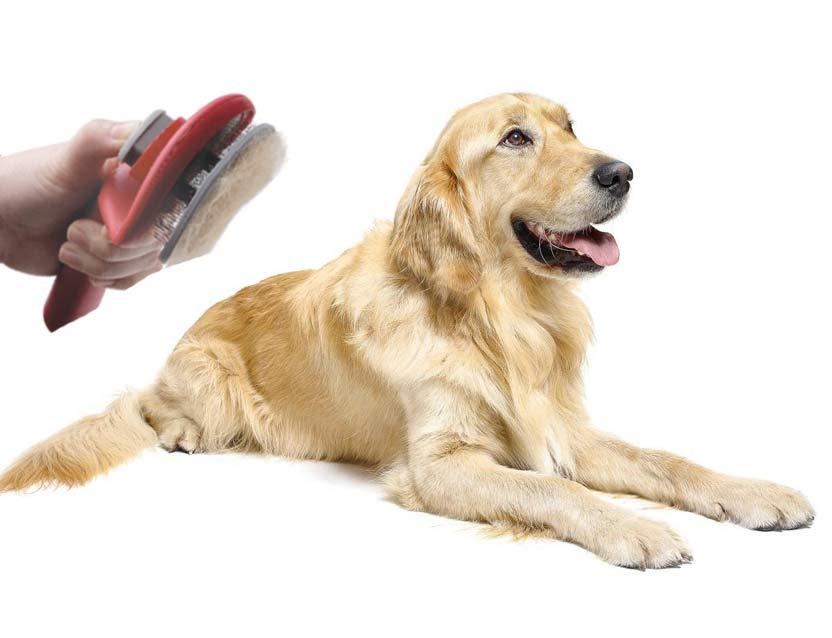 Carda autolimpiable para perro Le Salon