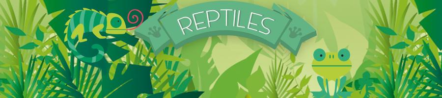 Accesorios para tus reptiles (terrarios, iluminación, alimentación, etc)
