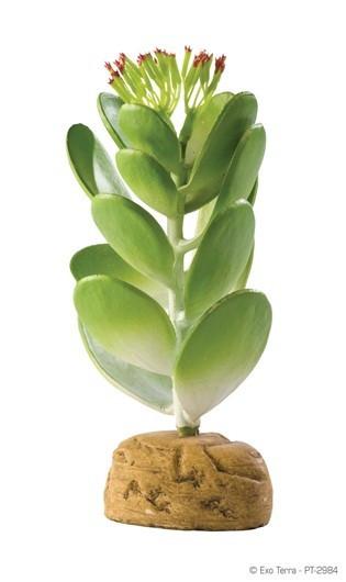 Cactus Jade EXOTERRA_PT2984