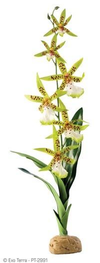 Planta Orquidea Araña EXOTERRA_PT2991