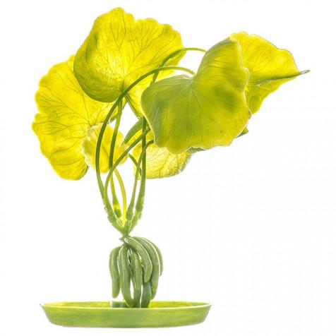Plantas Plasticas Elodea MARINA