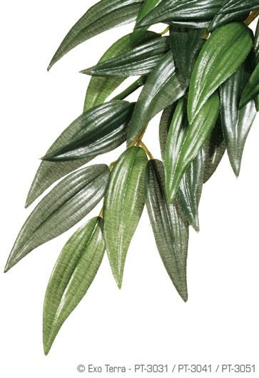 Plantas de Seda Rucus EXOTERRA