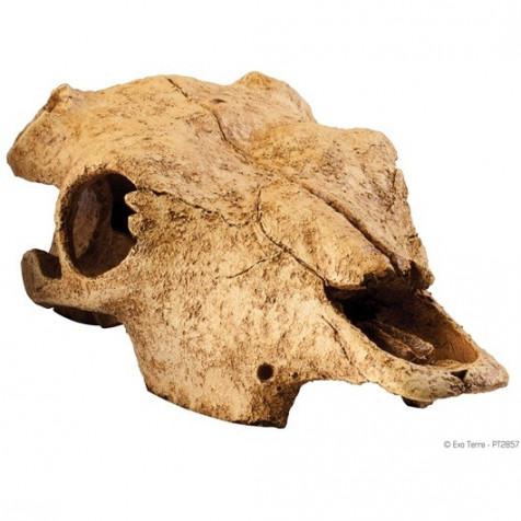 Refugio Bufalo Skull EXOTERRA_PT2857