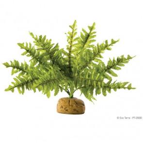 Planta Helecho de Boston EXOTERRA