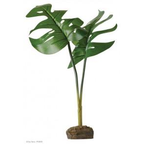 Planta Phyllo EXOTERRA