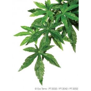 Plantas da Seda Abuliton