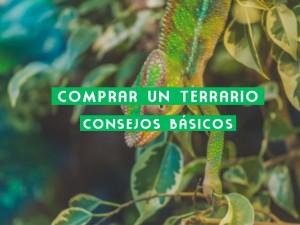 COMPRAR UN TERRARIO: CONSEJOS BÁSICOS