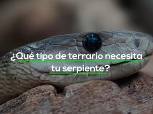 ¿Qué tipo de terrario necesita tu serpiente?