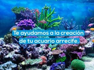 Te ayudamos a la creación de tu acuario arrecife.