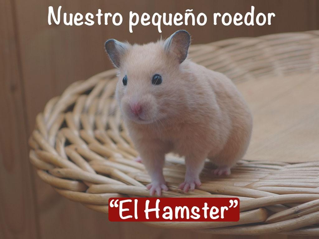 """Nuestro pequeño roedor """"El Hámster"""""""