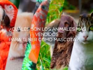 ¿Cuáles son los animales más vendidos para tener como mascota?