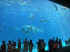 aquarium-456566__180