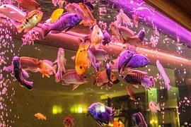 aquarium-707730__180