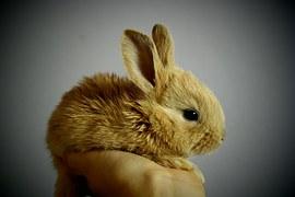 conejos 3
