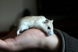 hamster 2