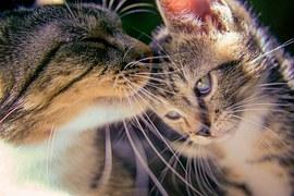 kitten-488667__180