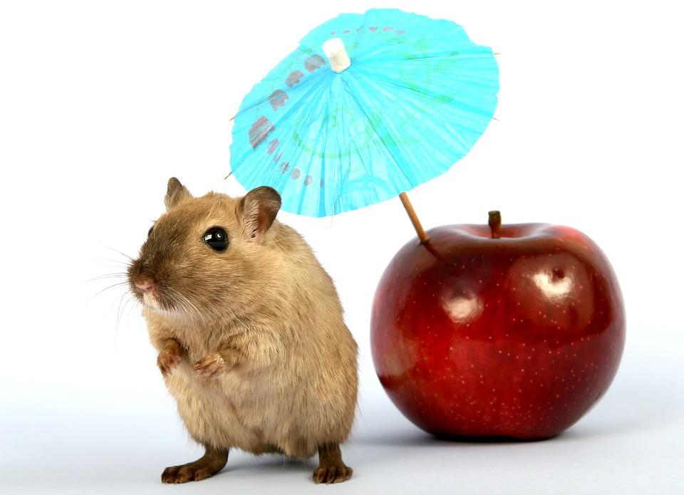 Un simpático hamster