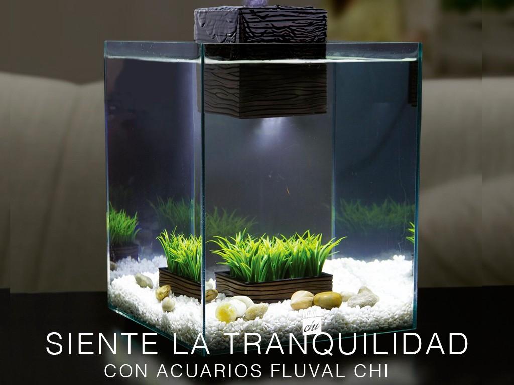 Siente la tranquilidad con acuarios FLUVAL CHI
