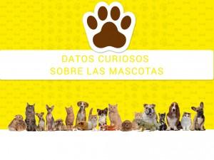 Mascotas: Datos curiosos