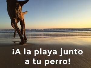 Playas para perros: ¿ Dónde tienes la más cercana?
