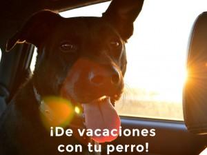Viajar con perros: ¡Llévate a tu mascota contigo!