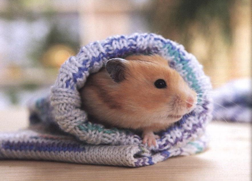 Un hamster arropadito
