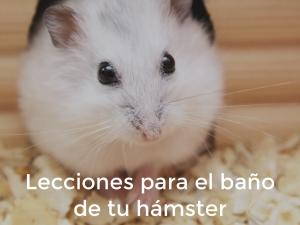 Hamster: ¿Es necesario lavarlo?
