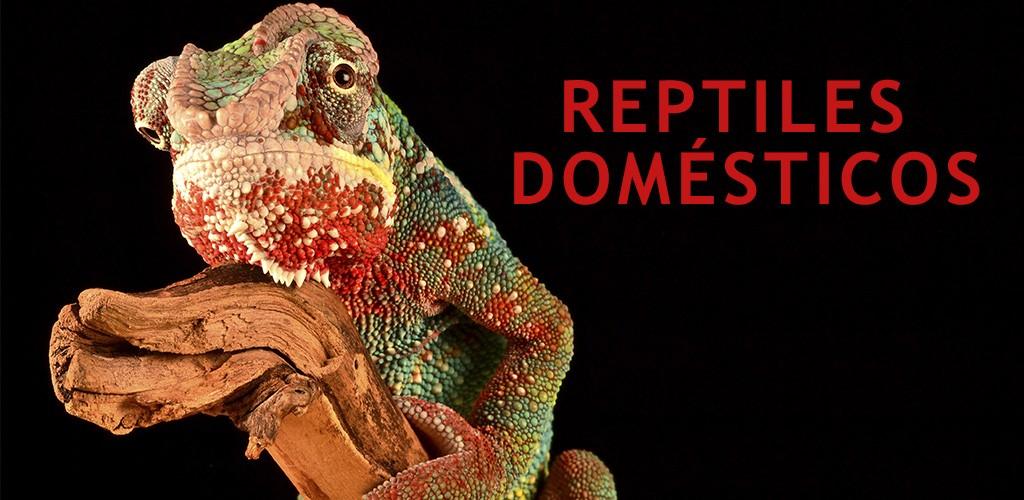 Reptiles domésticos