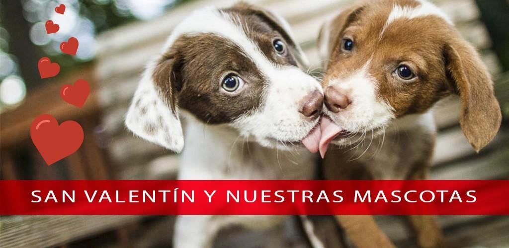 El San Valentín de nuestras mascotas