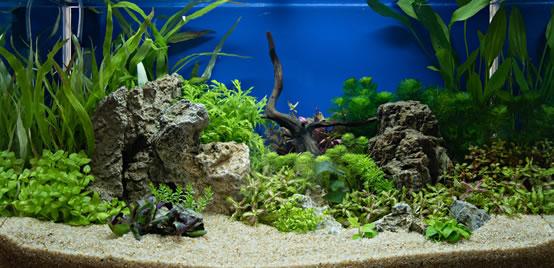 Decoración de acuarios para peces betta