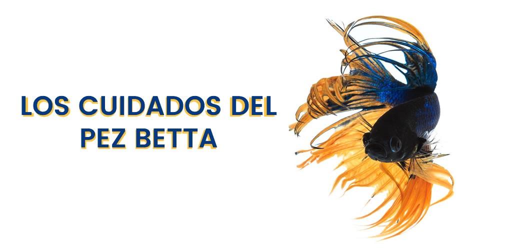 Los cuidados del pez Betta