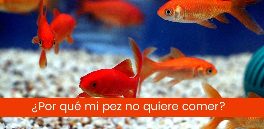 ¿Por qué mi pez no quiere comer?